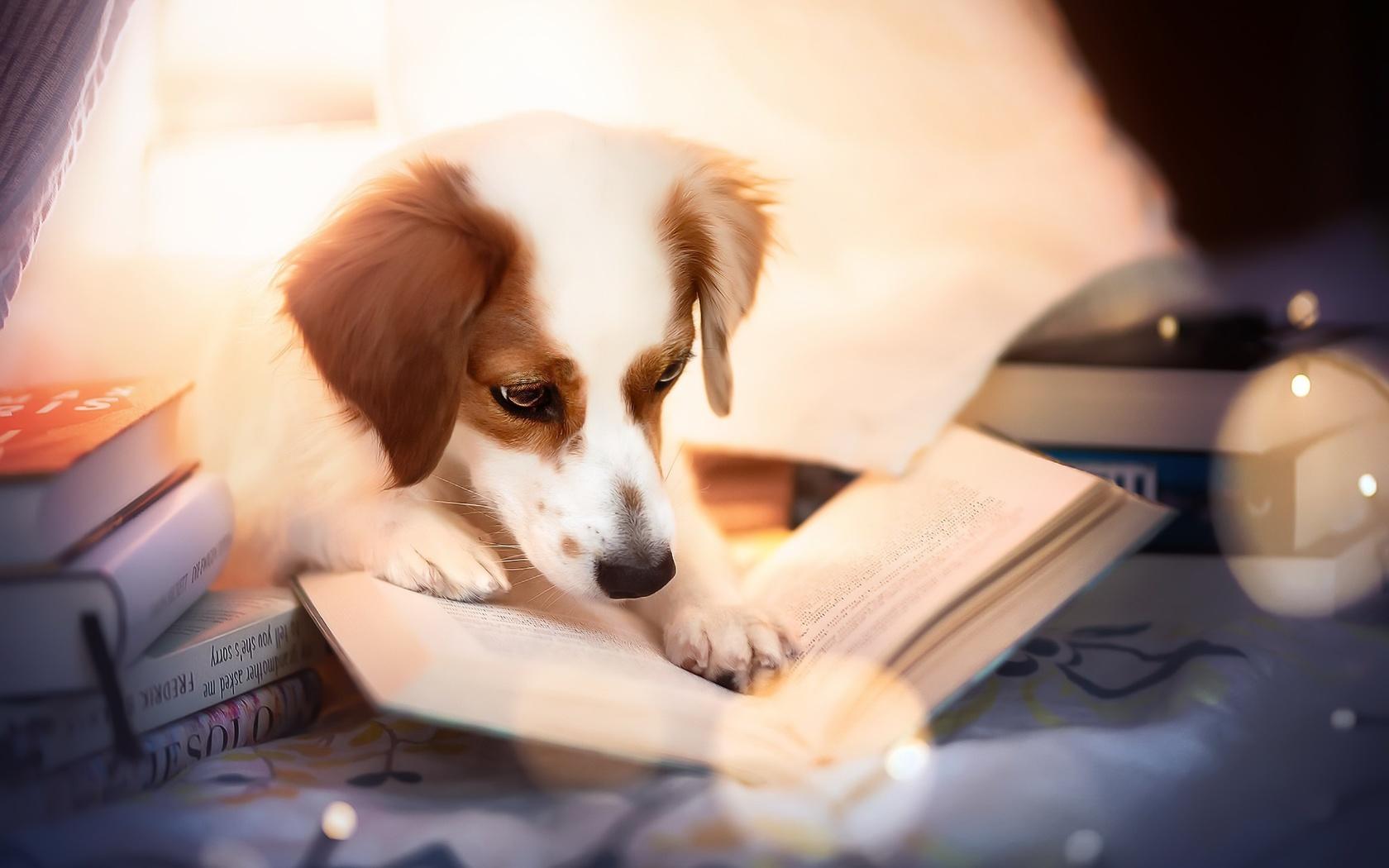животное, собака, пёс, книги, свет