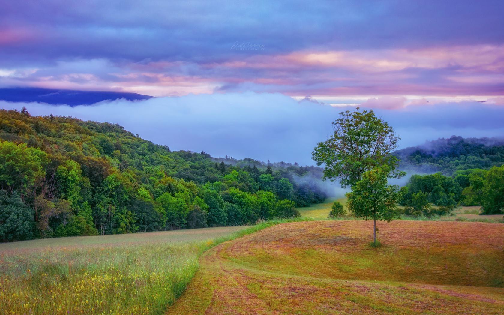 поле, деревья, небо, облака, холмы, пейзаж