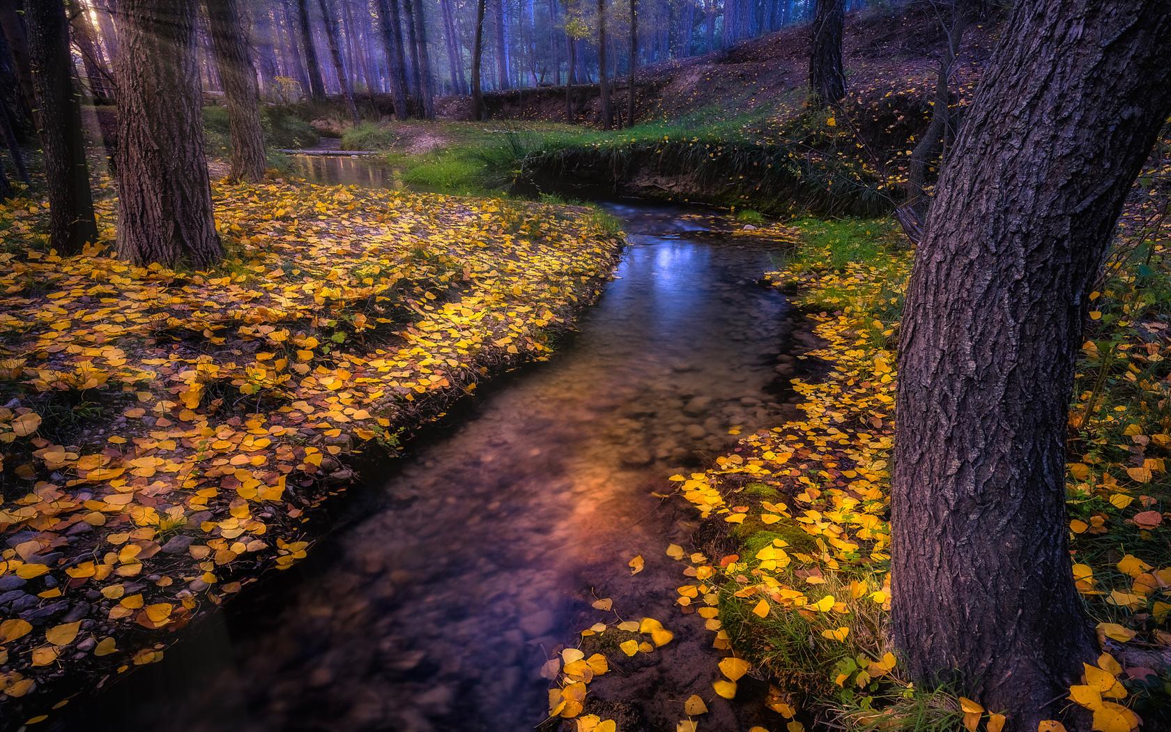 осень, лес, природа, ручей