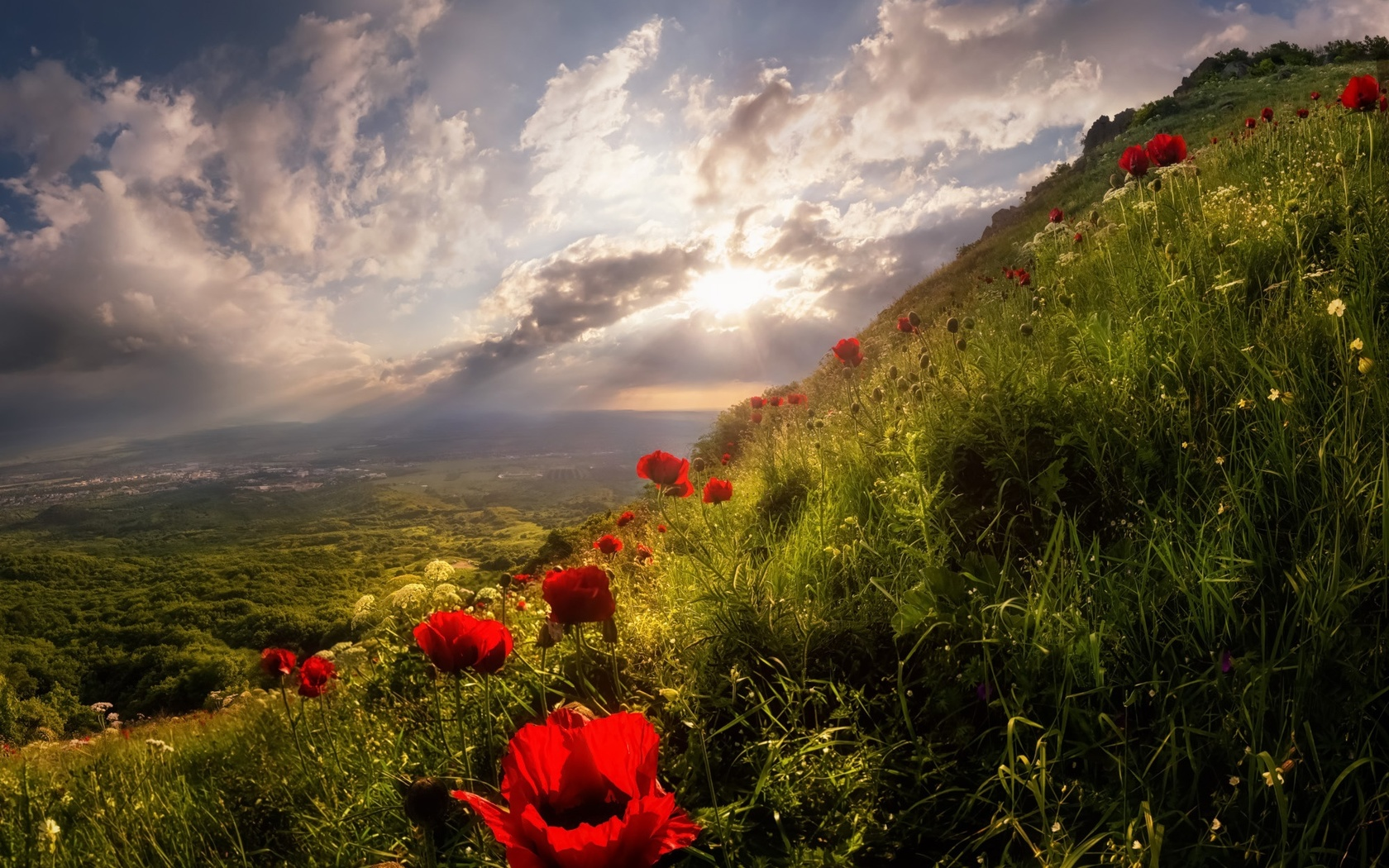 природа, лето, склон, цветы, маки, облака, солнце, лучи, пейзаж