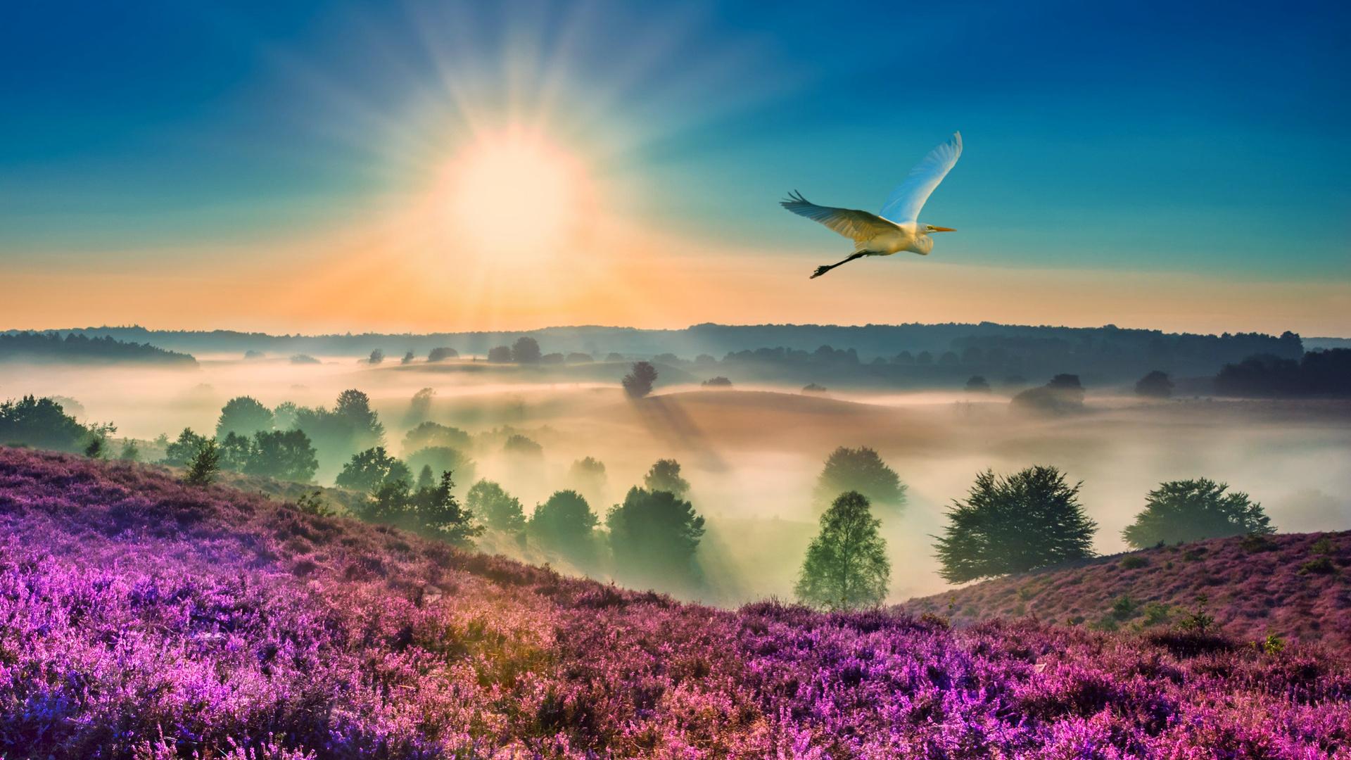 пейзаж, утро, туман