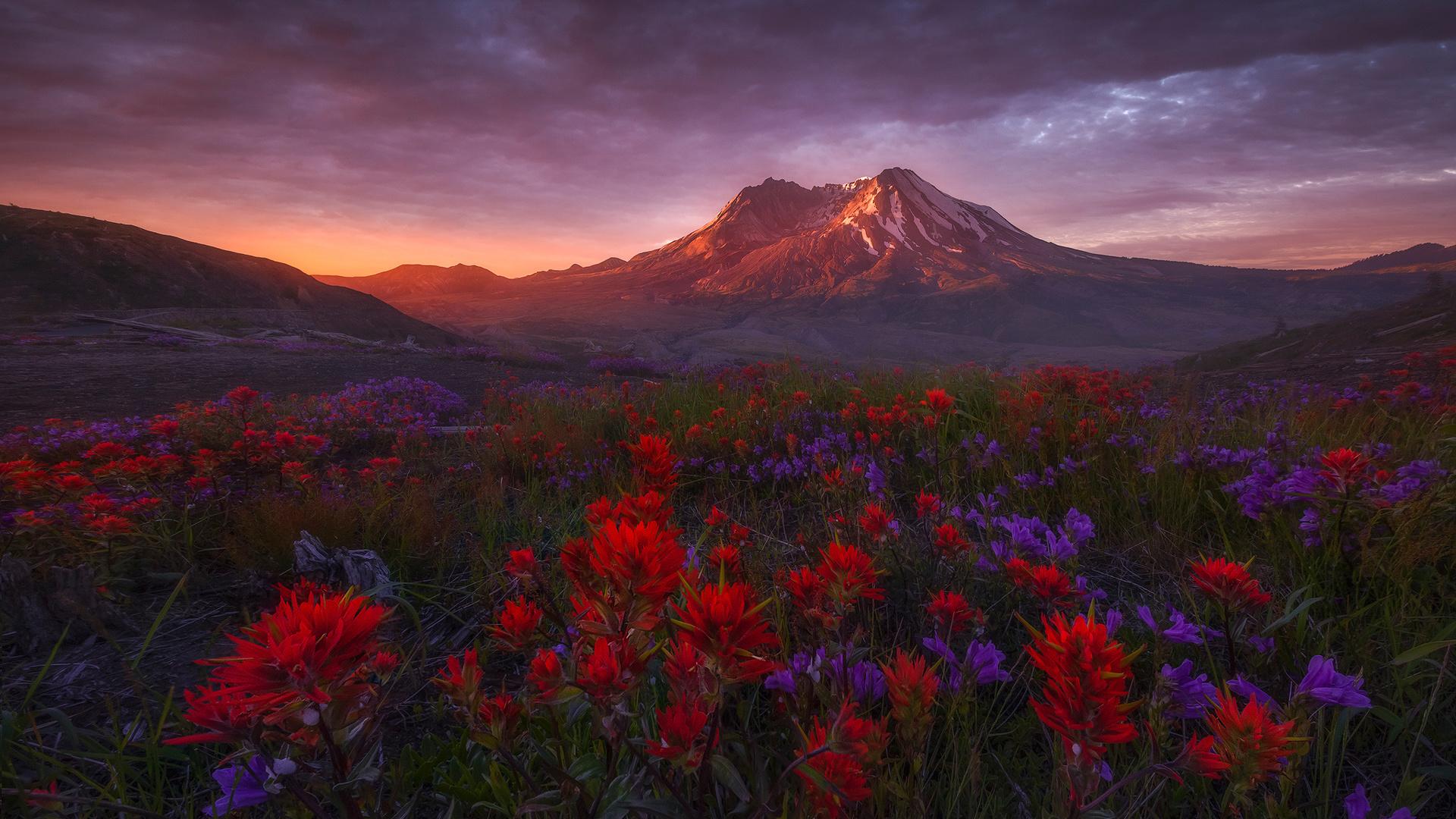 пейзаж, цветы, горы, природа, рассвет, вашингтон, сша, луга