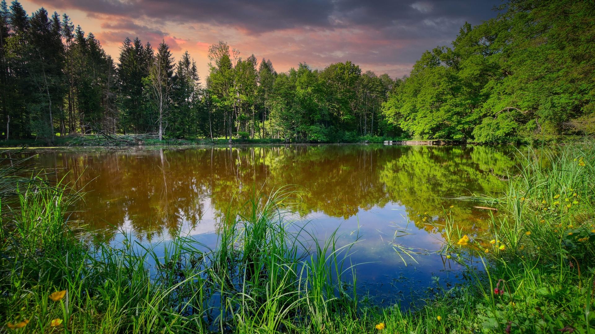 озеро, пруд, болото