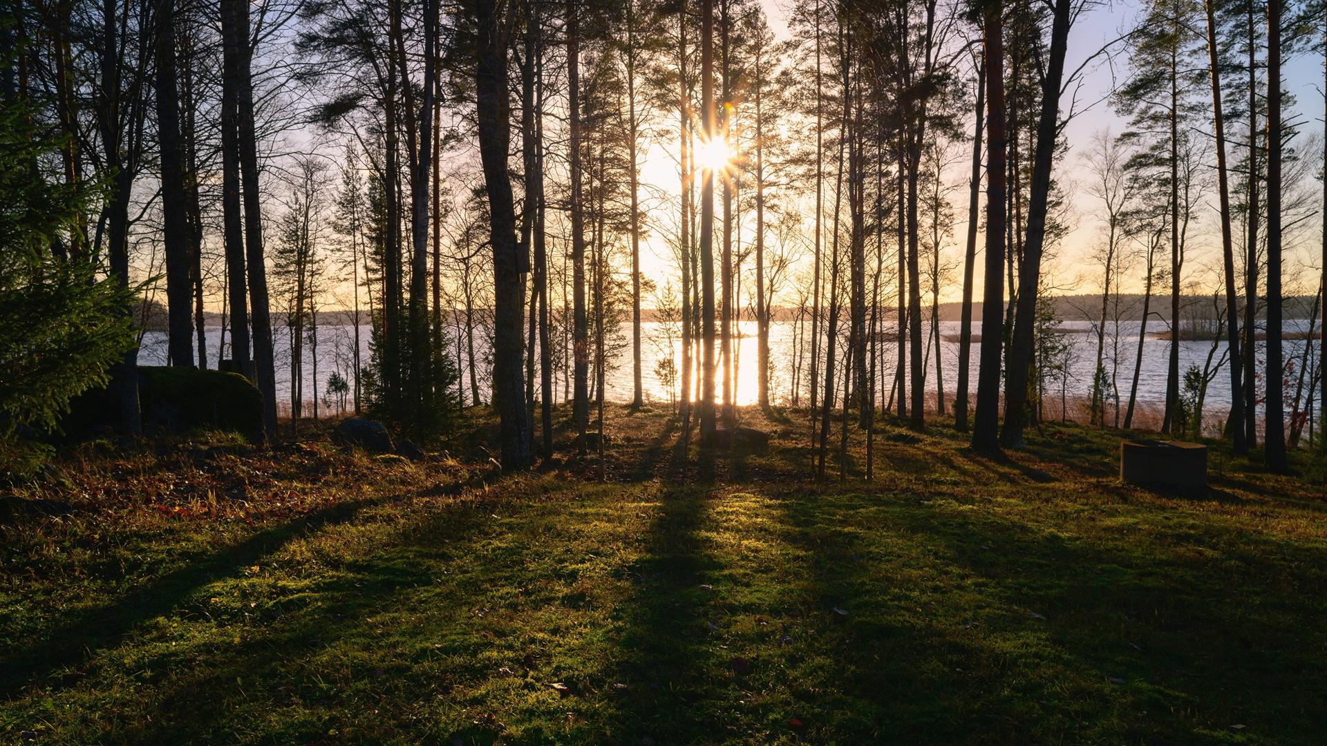 финляндия, лес, озеро