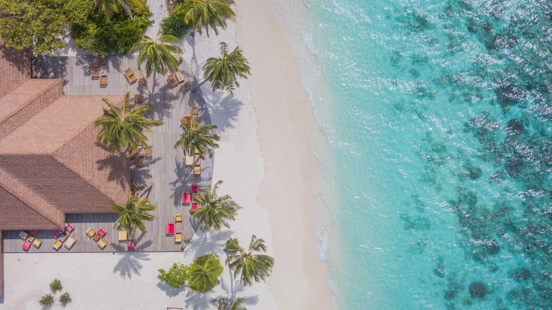 maldives, beach aerial view, ocean, palm trees, top view, tropical island