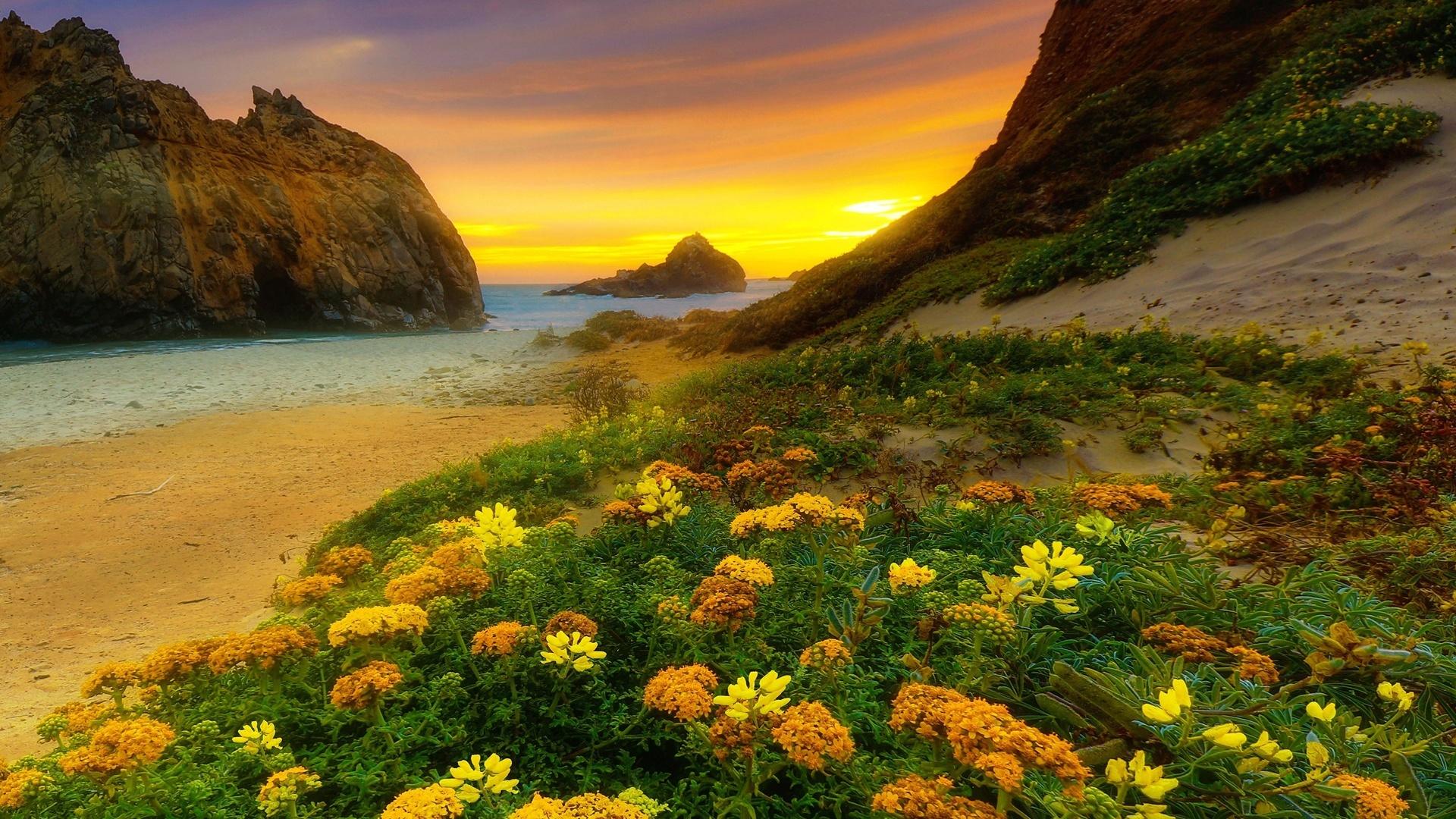 сша, калифорния, природа, пейзаж, океан, горы, скалы, берег, цветы