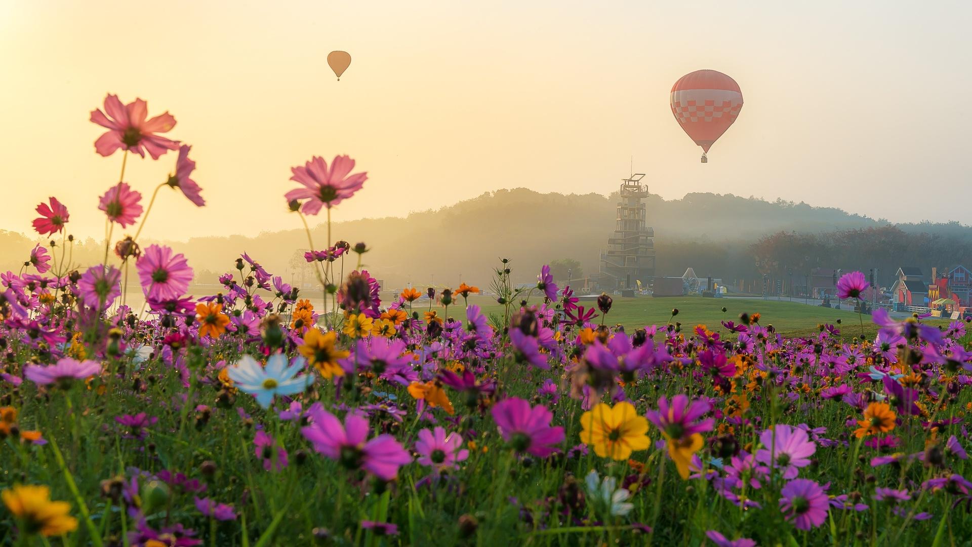 космея, луг, воздушный шар, цветы