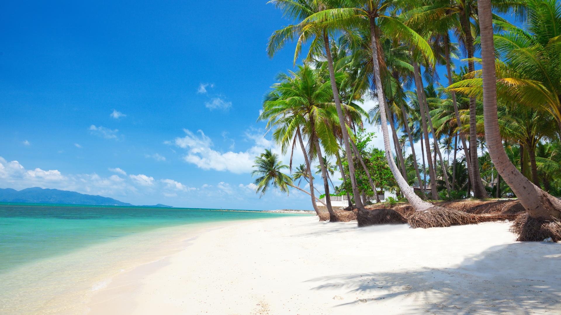 пальмы, океан, залив