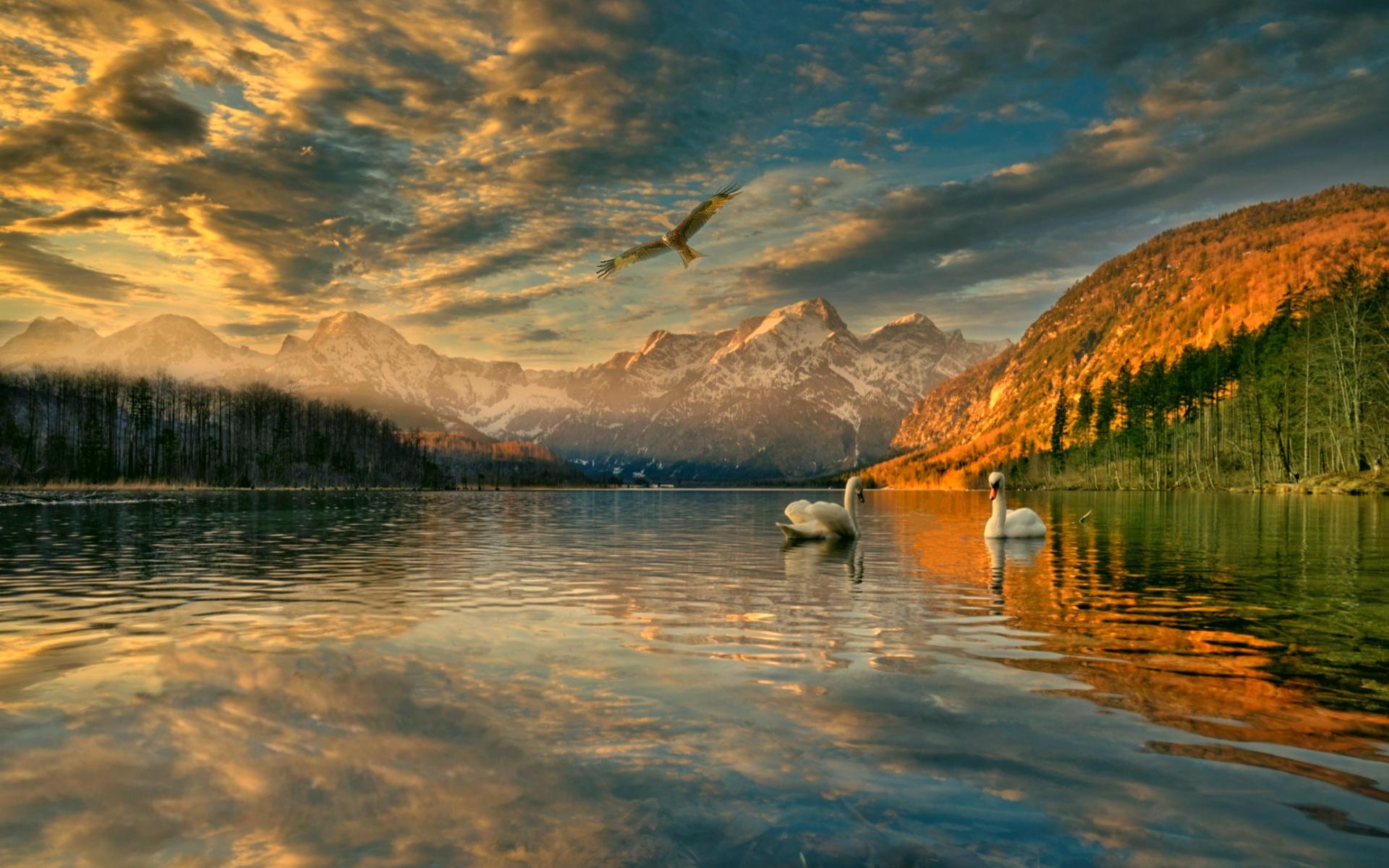 лебеди, коршун, пейзаж