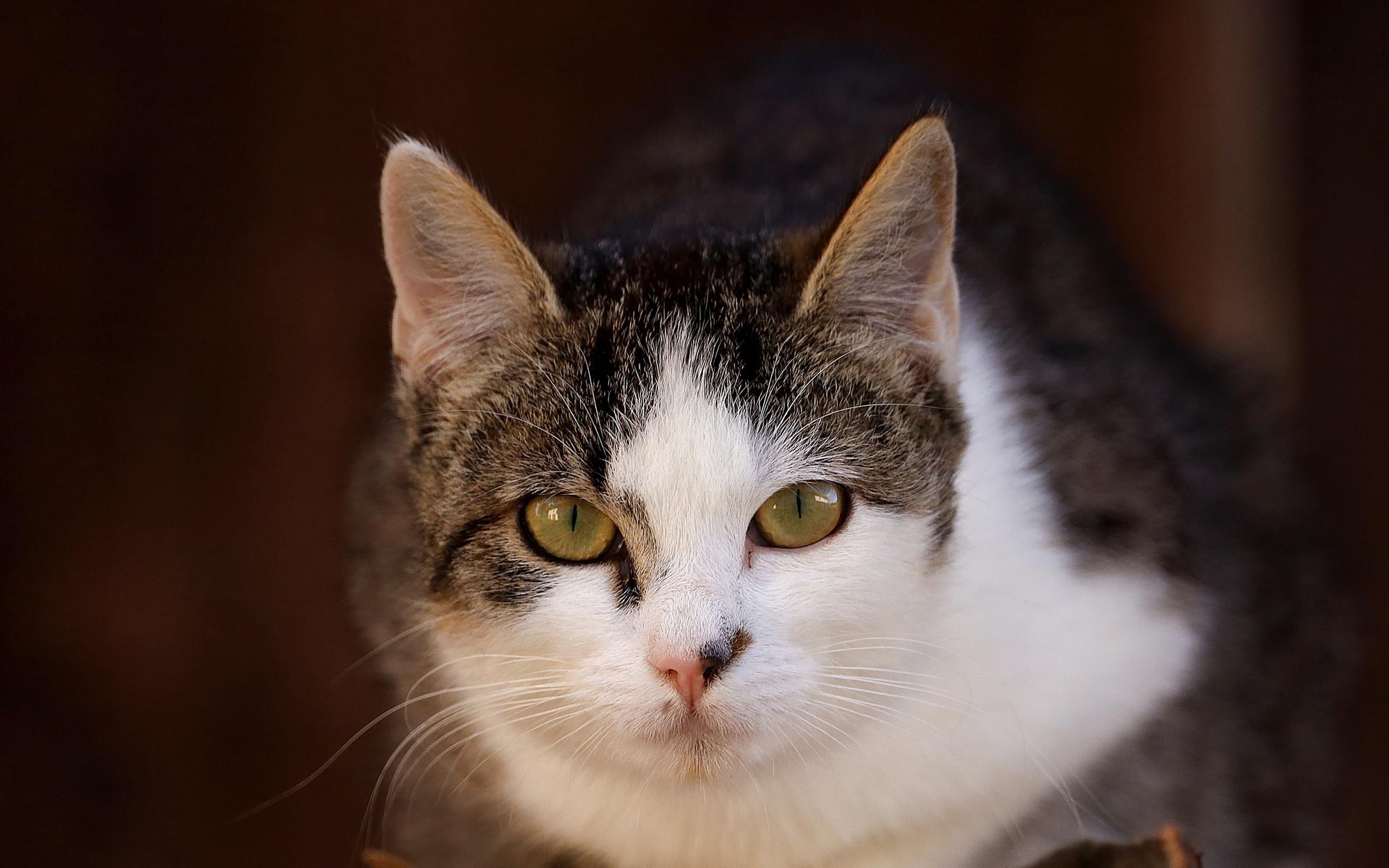 кошка, мордочка, фон