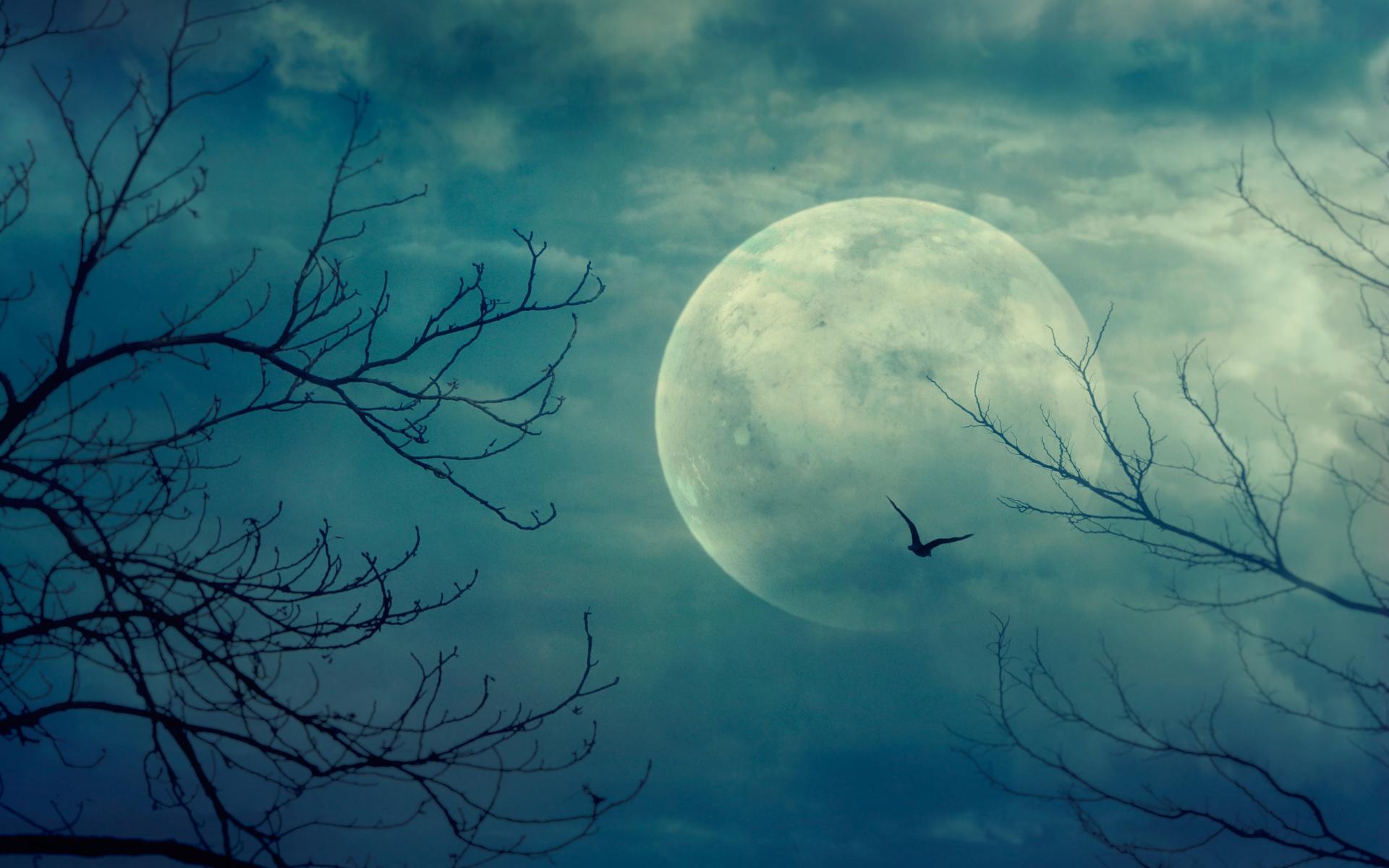 небо, луна, ветки, природа