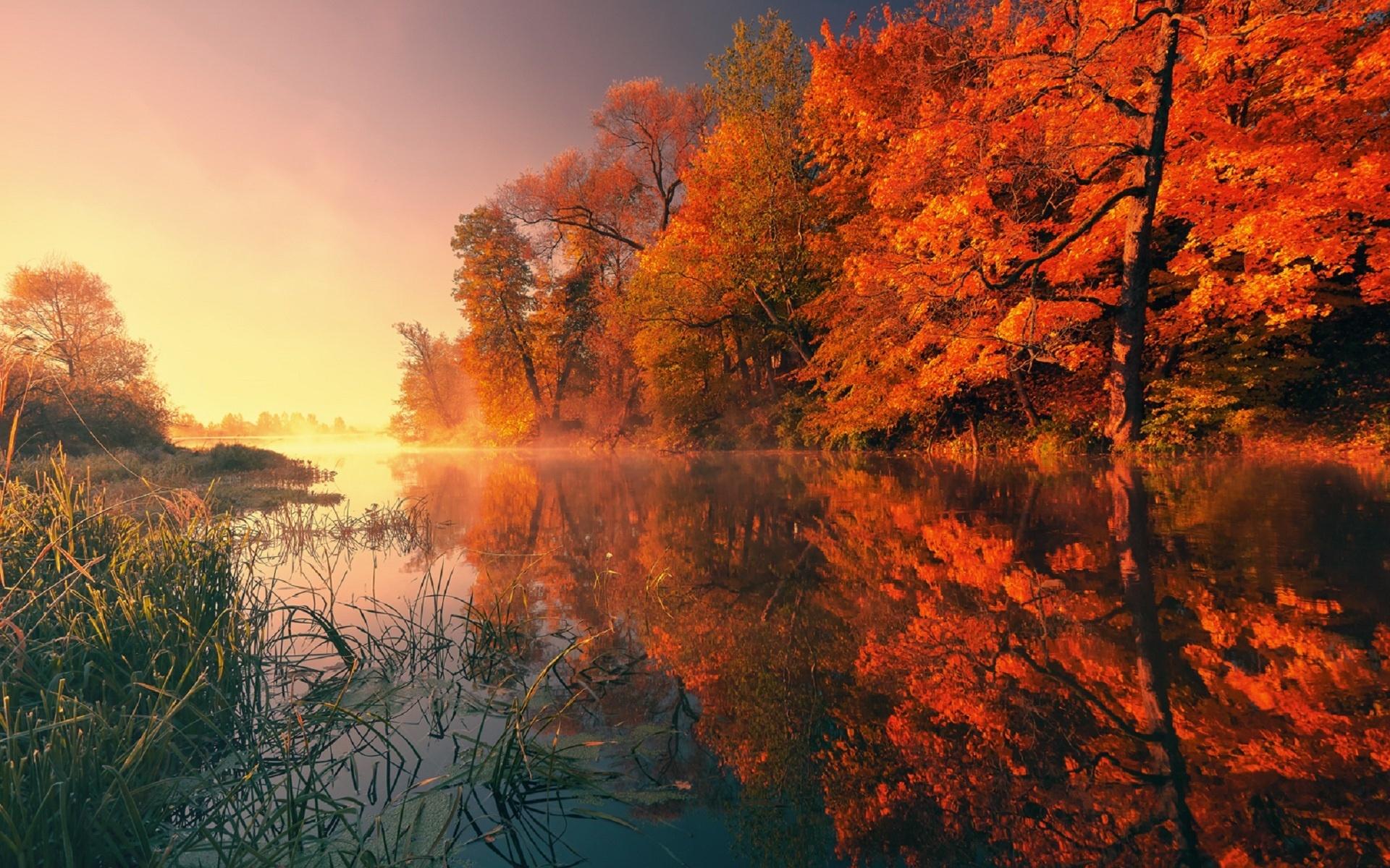 природа, пейзаж, осень, река, трава, деревья