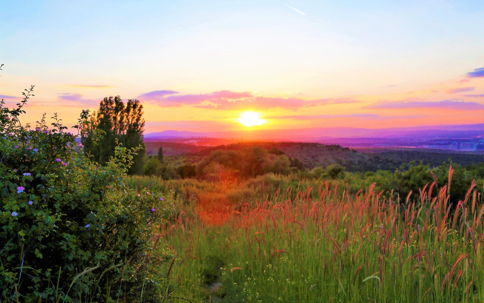трава, закат, природа