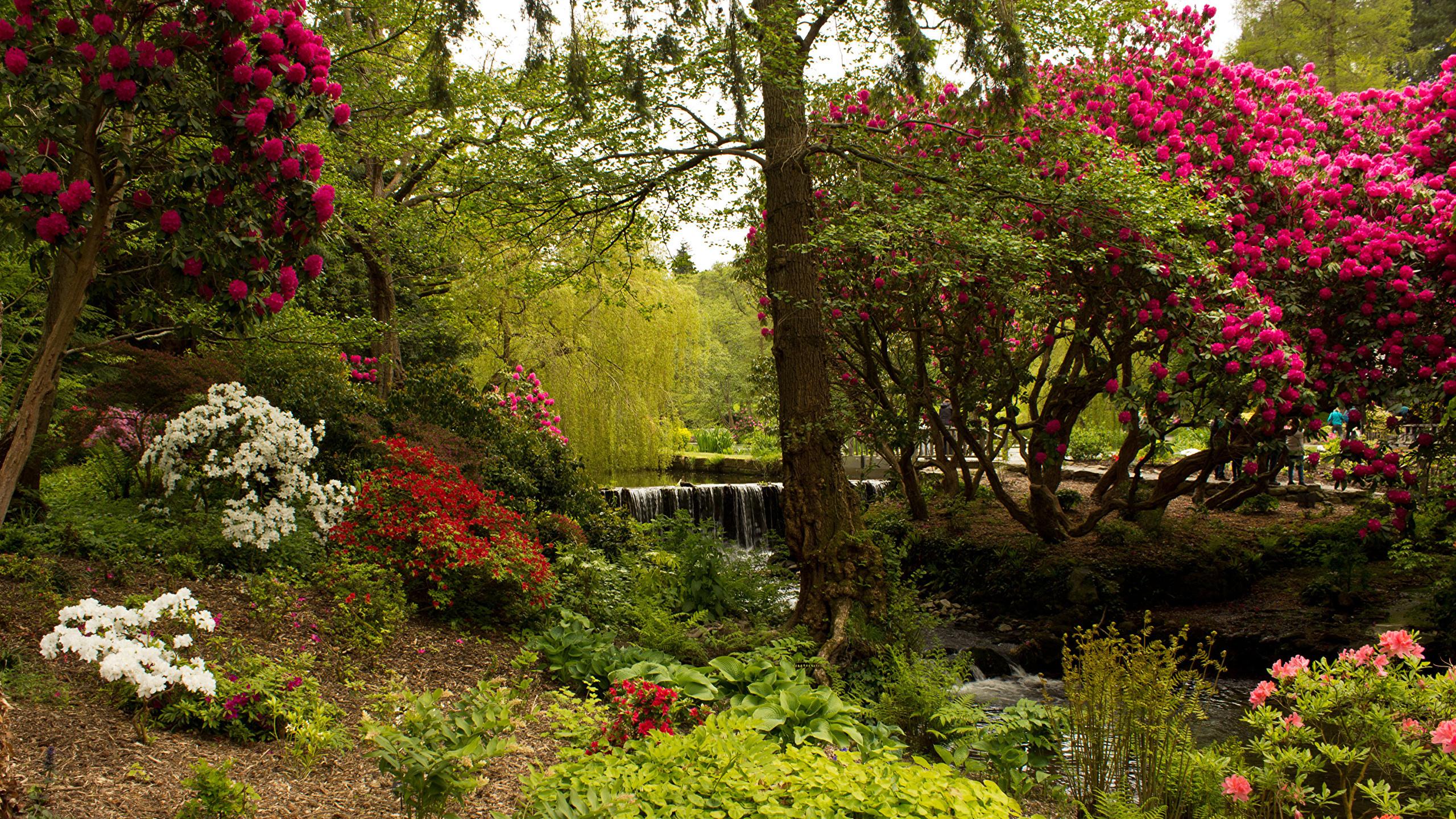 великобритания, сады, bodnant, garden, деревья, кусты, природа