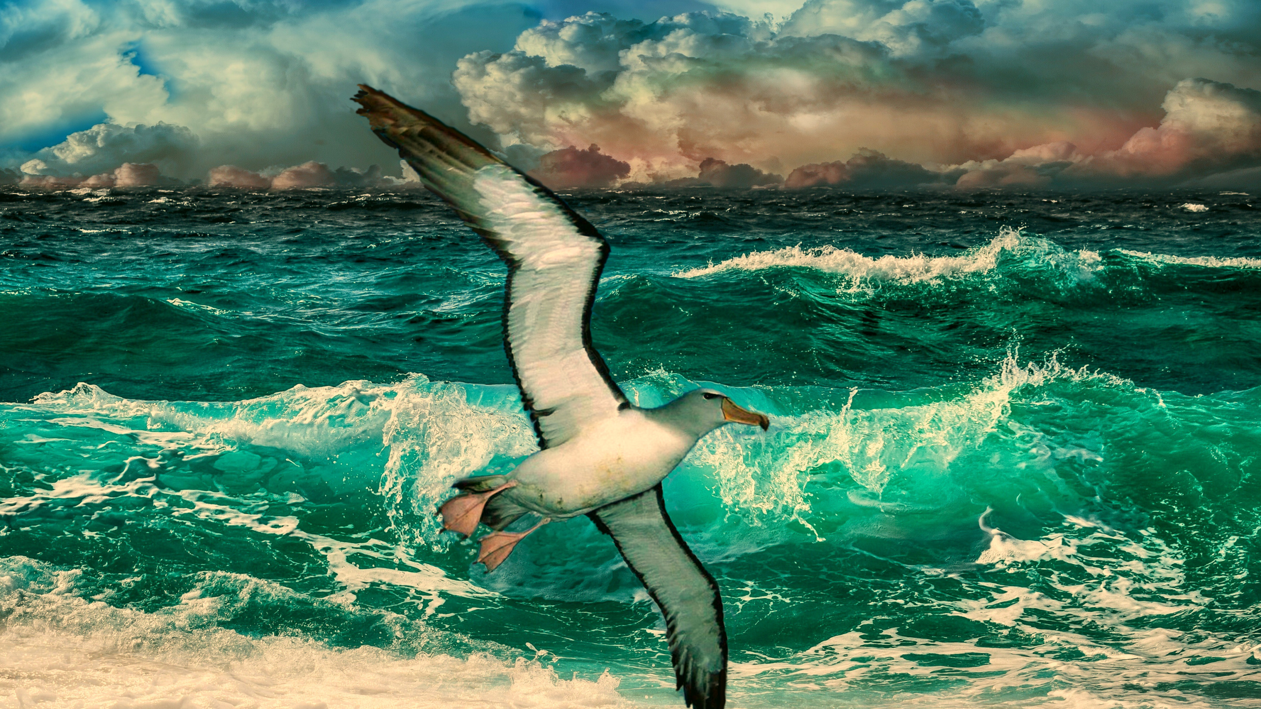 чайка, прибой, лазурь, небо