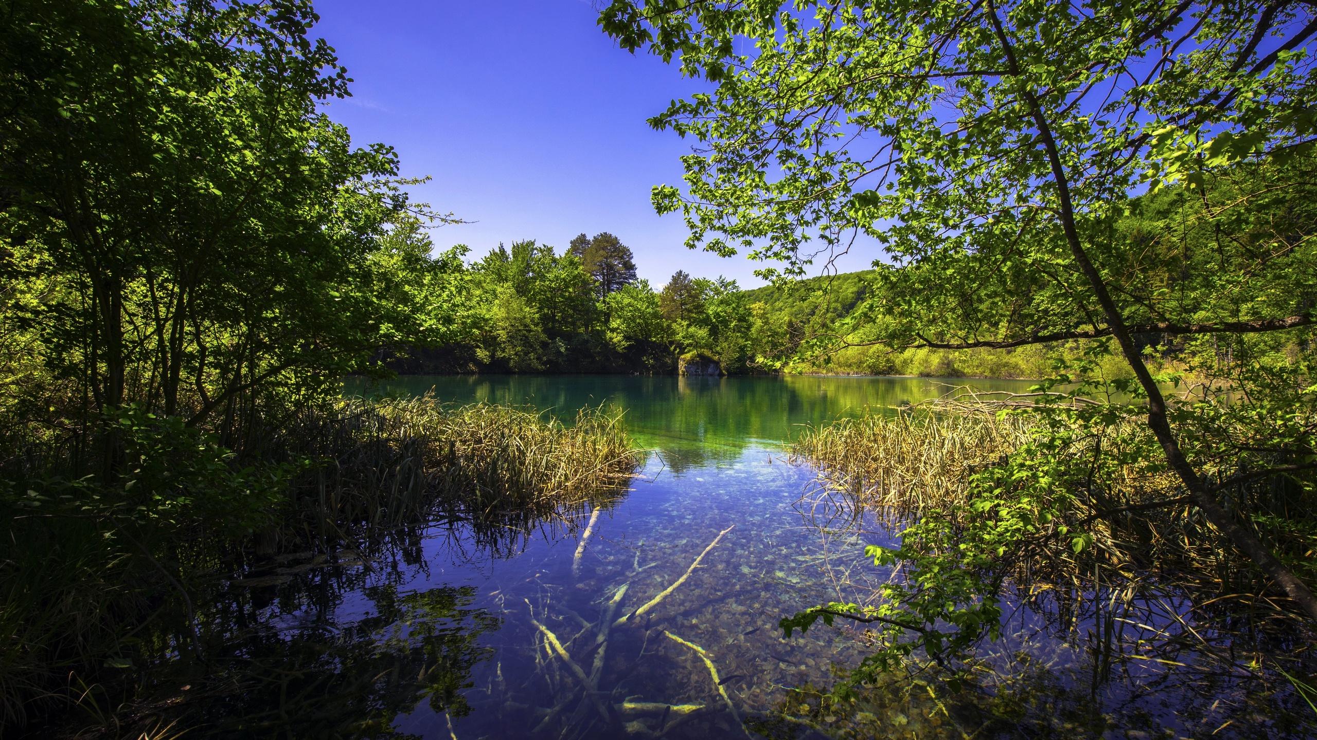природа, озеро, красиво