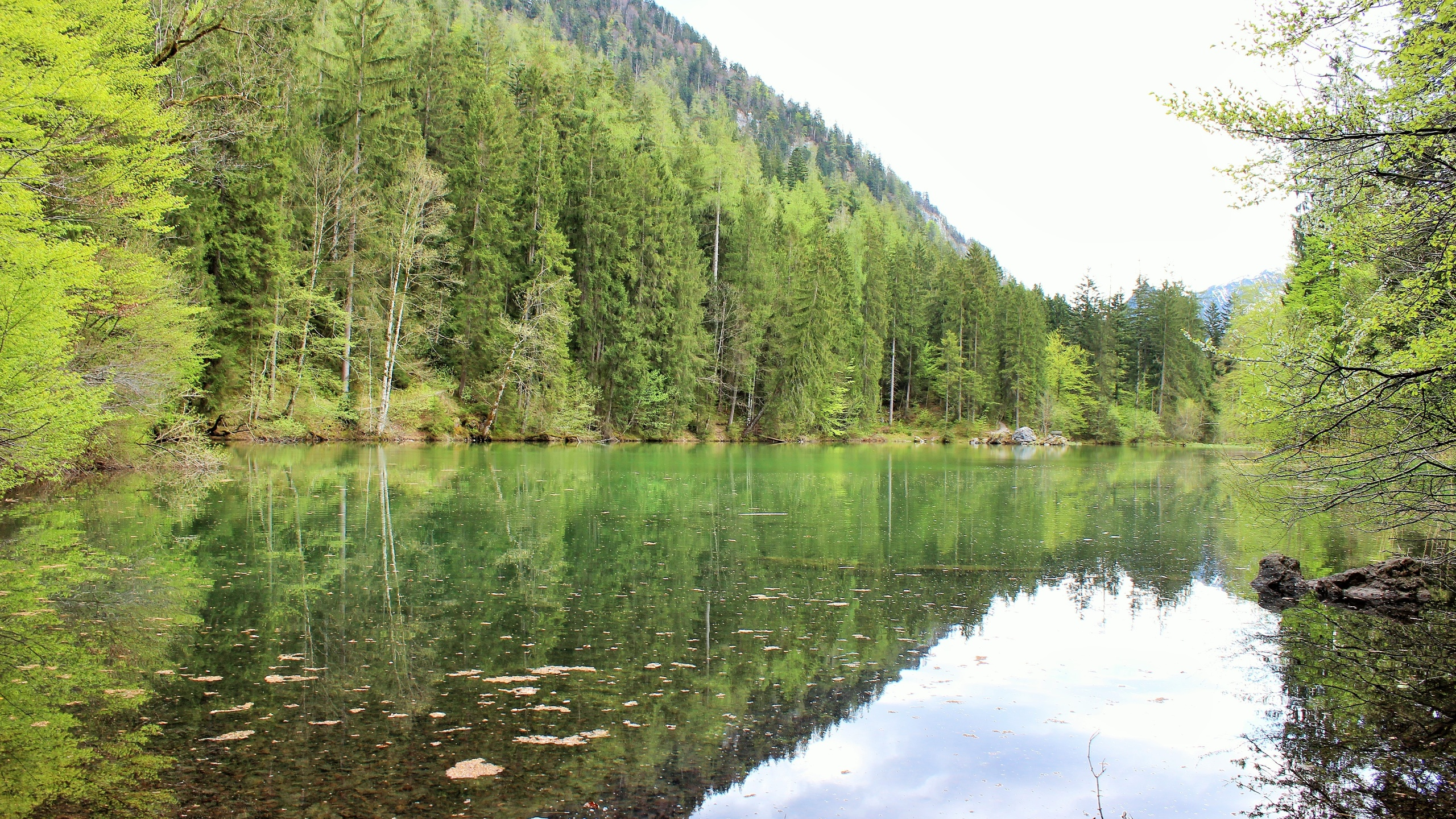 озеро, деревья, лето