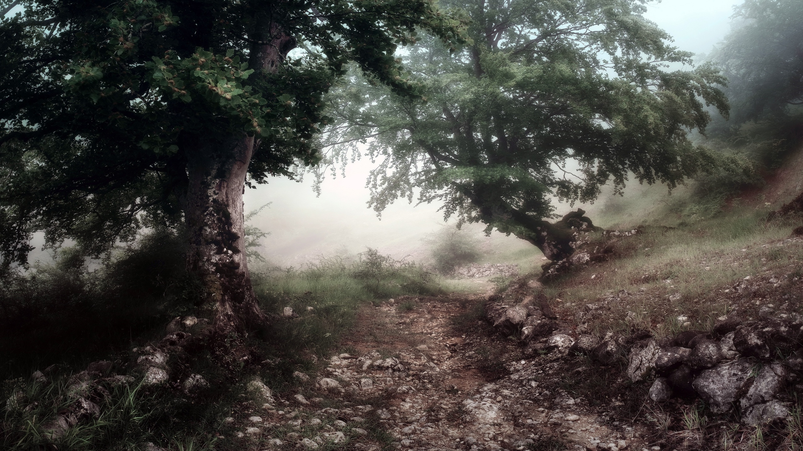тропинка, деревья