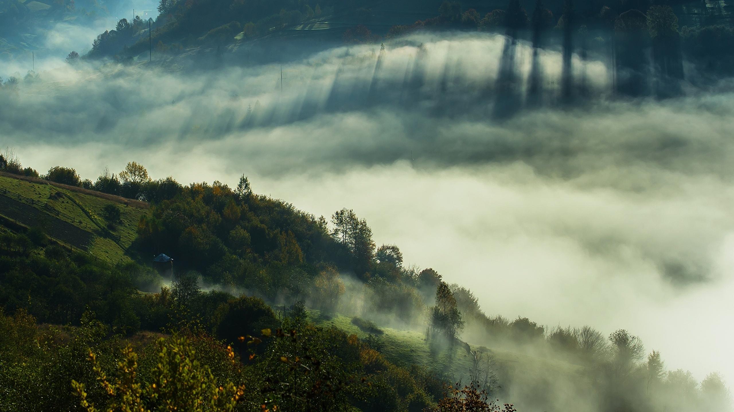 украина, закарпатская область, туман