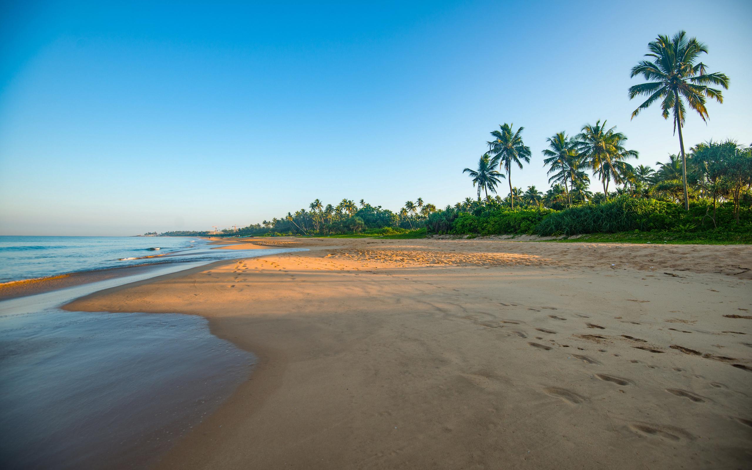 шри-ланка, побережье, море, bentota, beach, пальмы, пляж, природа
