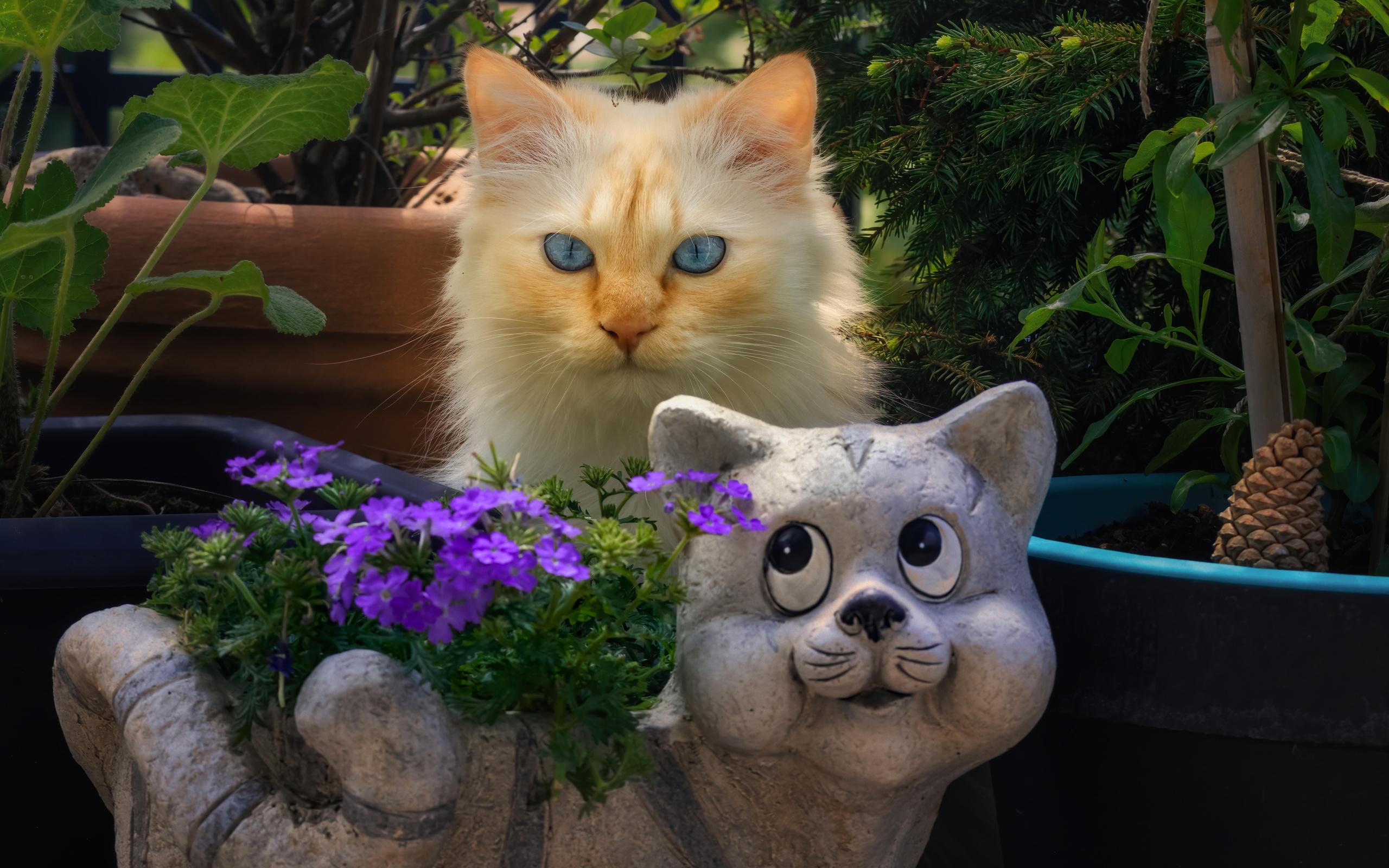 кошки, двое, взгляд, животные