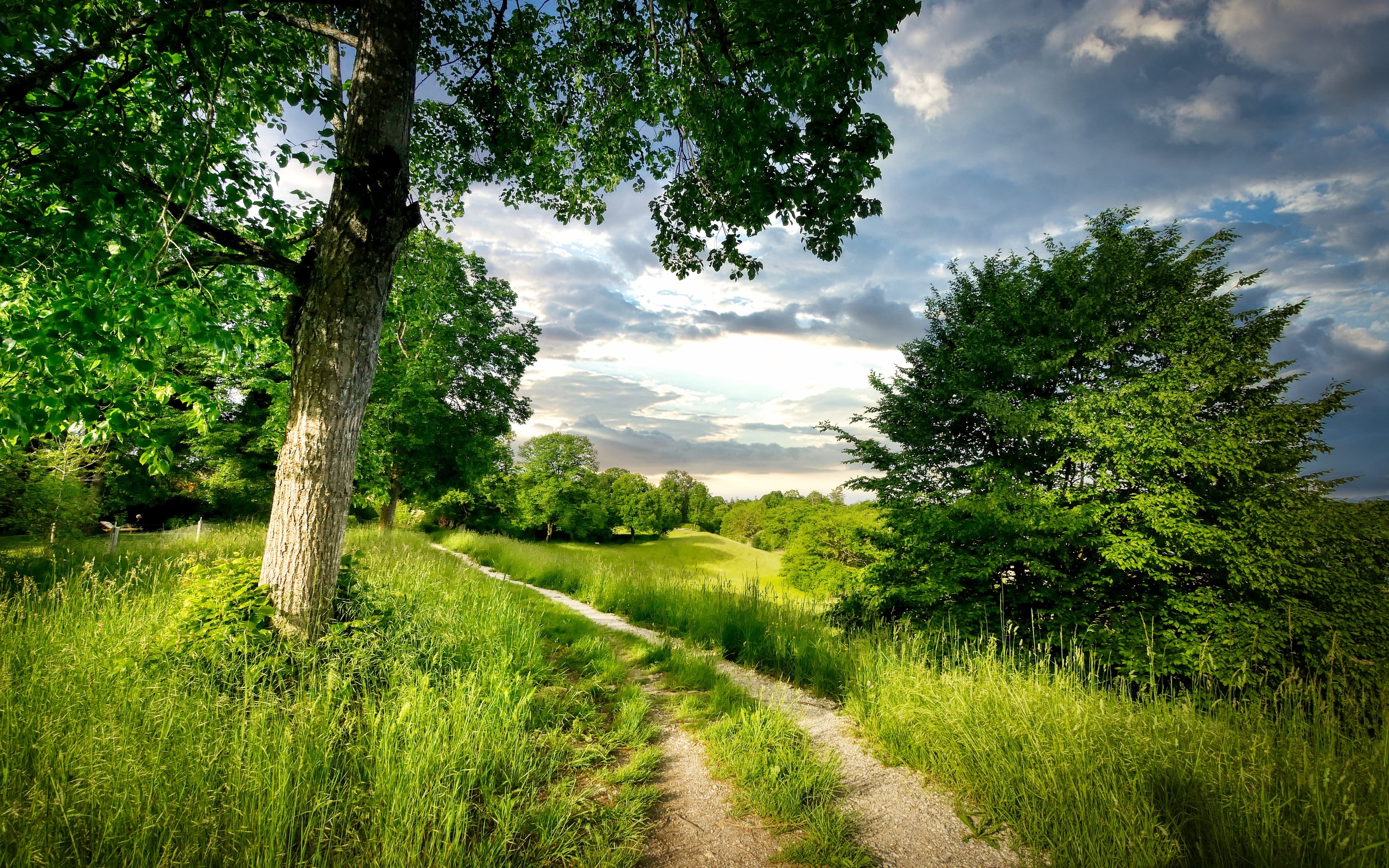 трава, тропинка, пейзаж