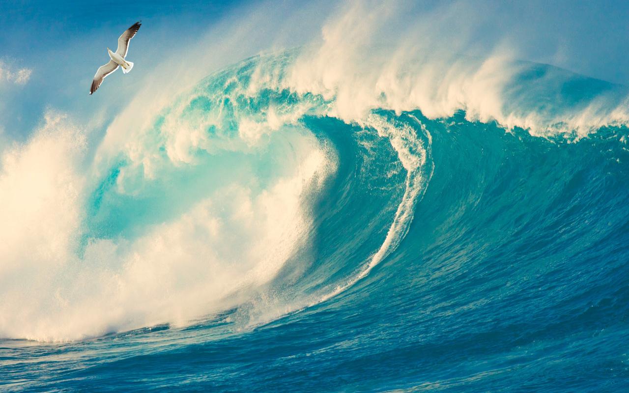 волна, океан, чайка