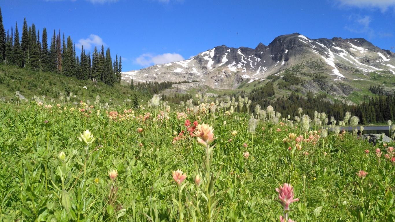 луг, цветы, горы, небо
