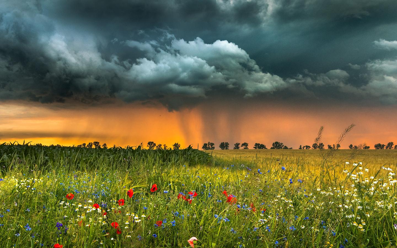 природа, пейзаж, лето, поле, травы, цветы, гроза, тучи