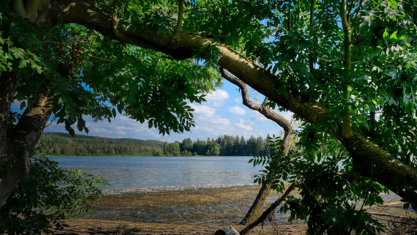 небо, река, берег, деревья