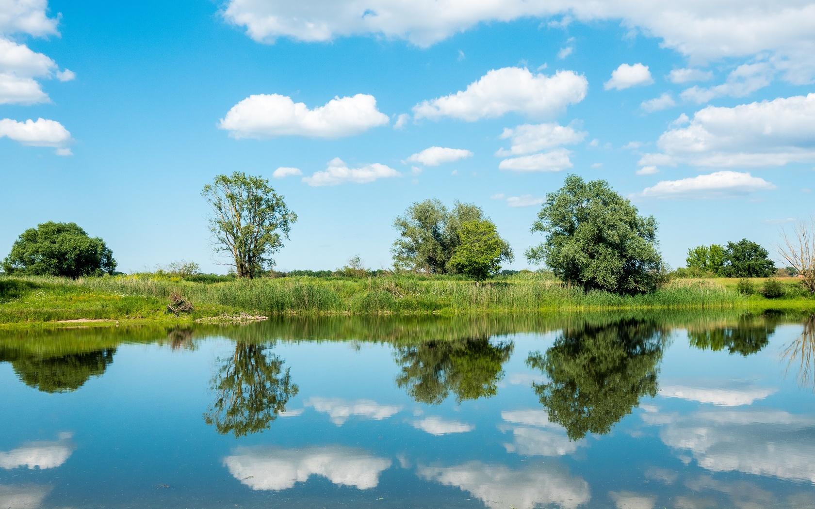 небо, река, отражение, деревья, луг, эльба