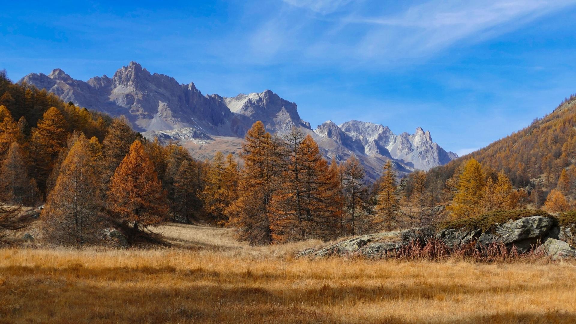горы, лес, небо