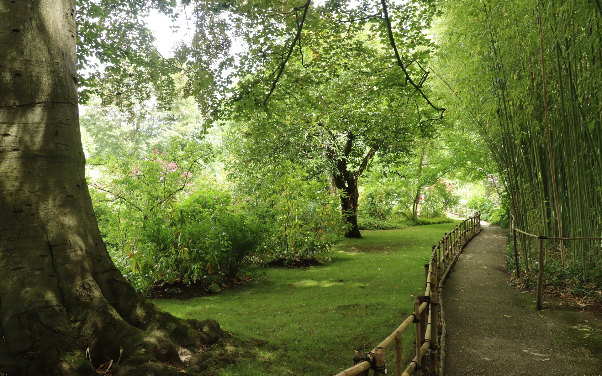 парк, дорожка, живерни, франция