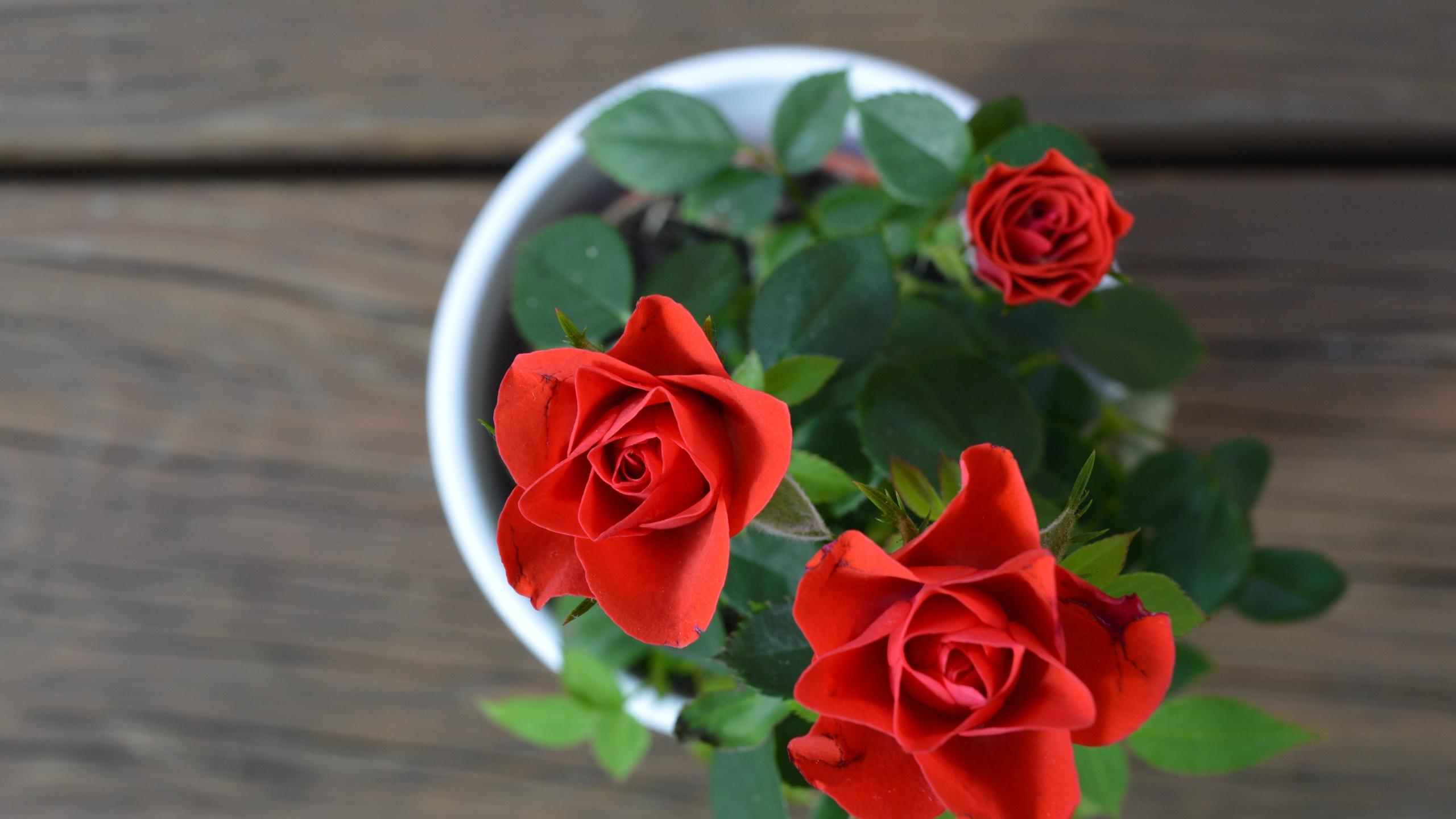 розы, листья, ваза, фон