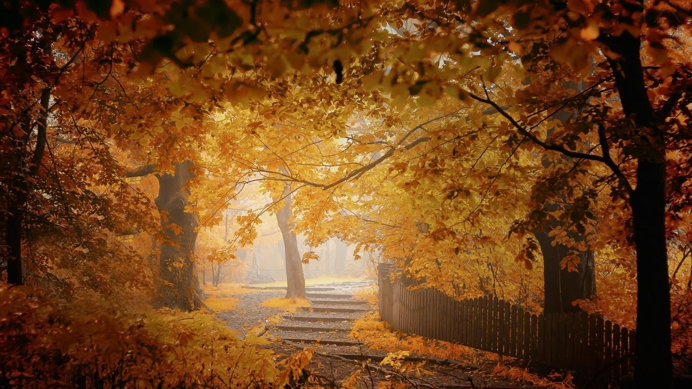 листья, забор, деревья, листва, осень