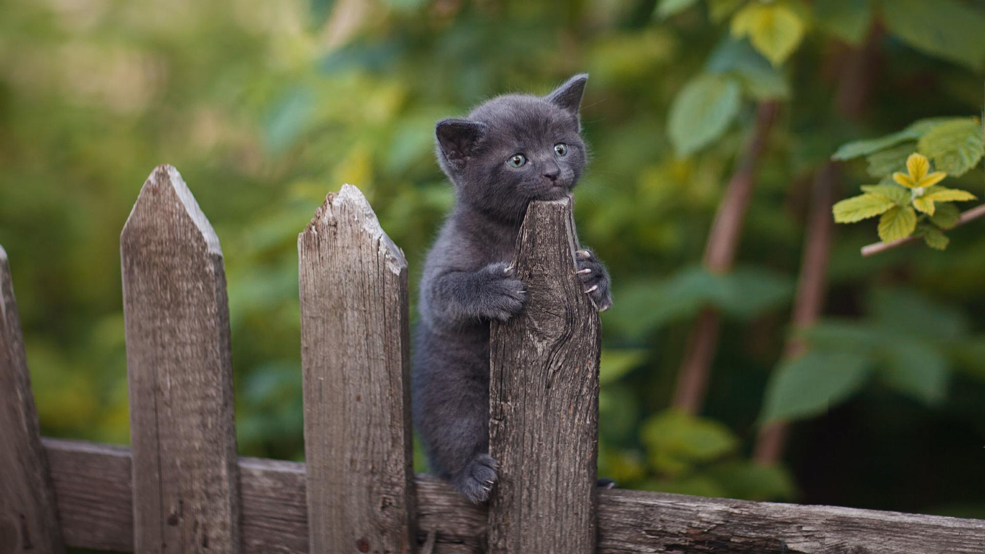 природа, растительность, животное, забор, малыш, детёныш, котёнок, юрий коротун