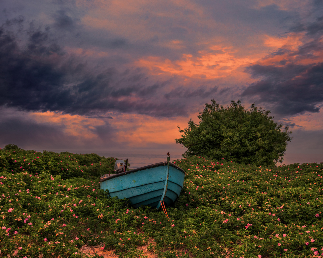 швеция, закат, лодки, небо, degeberga, трава, кусты, облака, природа