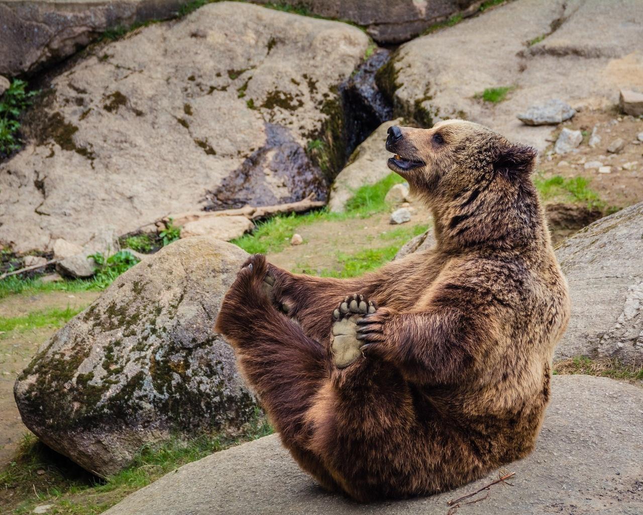 медведь, весело, скалы, хищник