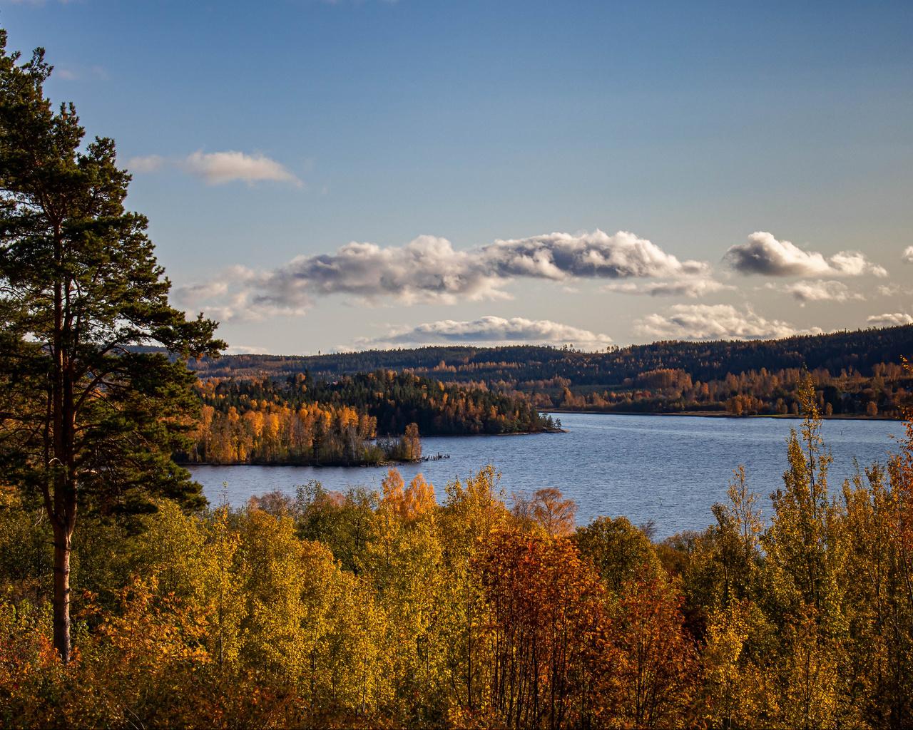 осень, озеро, деревья, ветки, лес