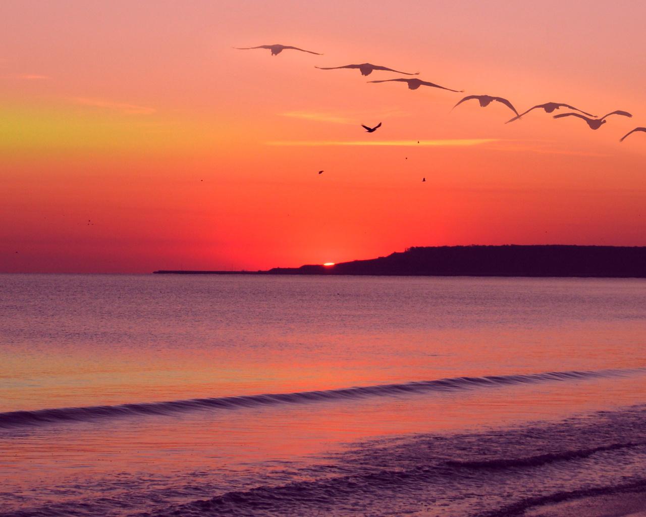 заря, вечер, море, птицы