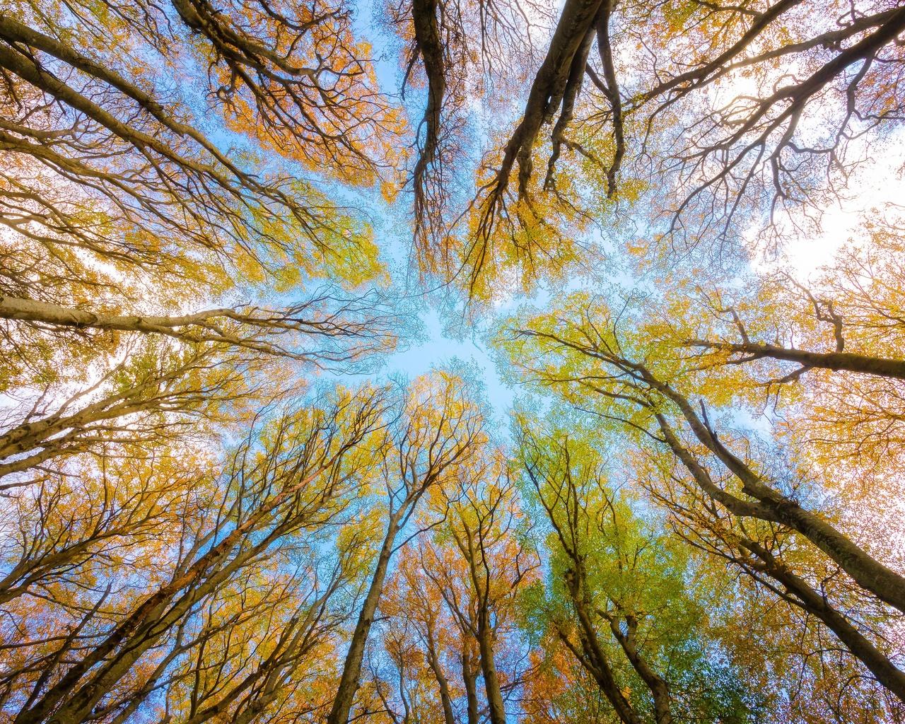 деревья, небо, ветви, осень, листья