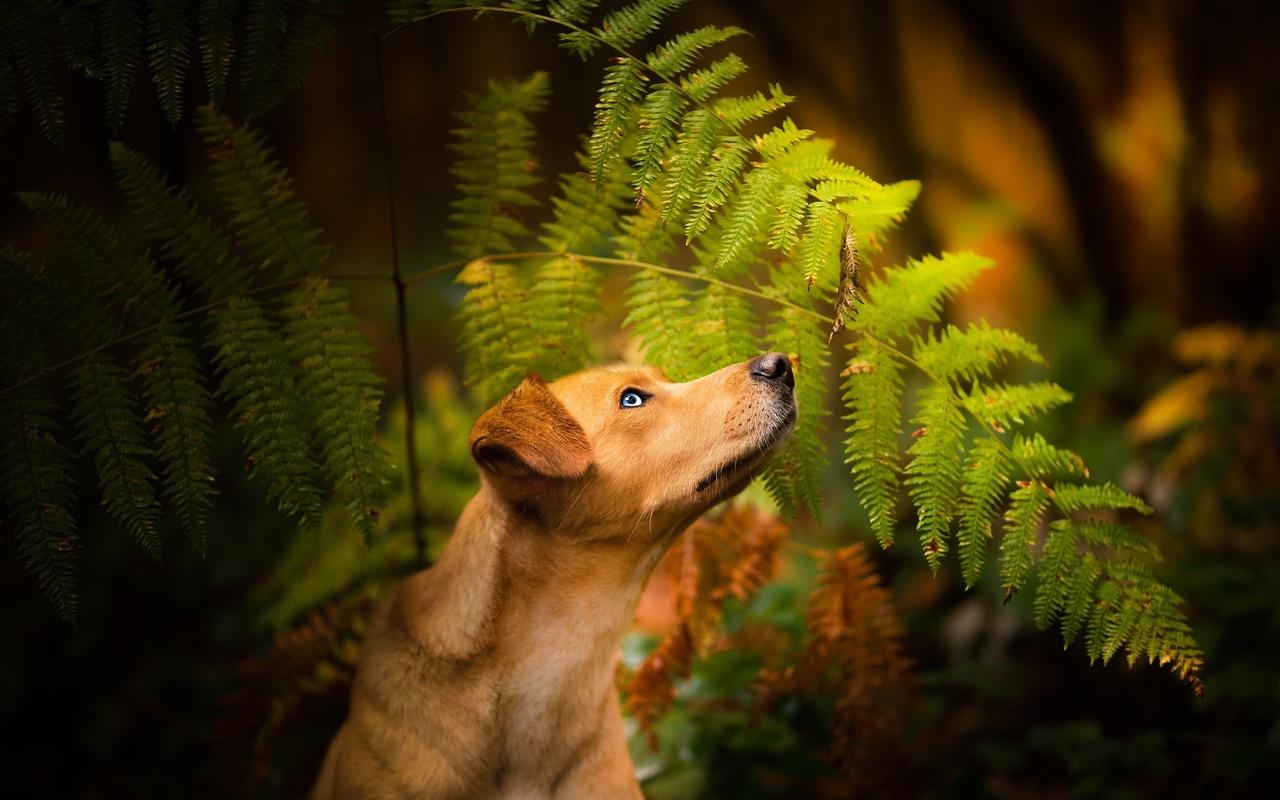 животное, собака, пёс, профиль, природа, листья, папоротник