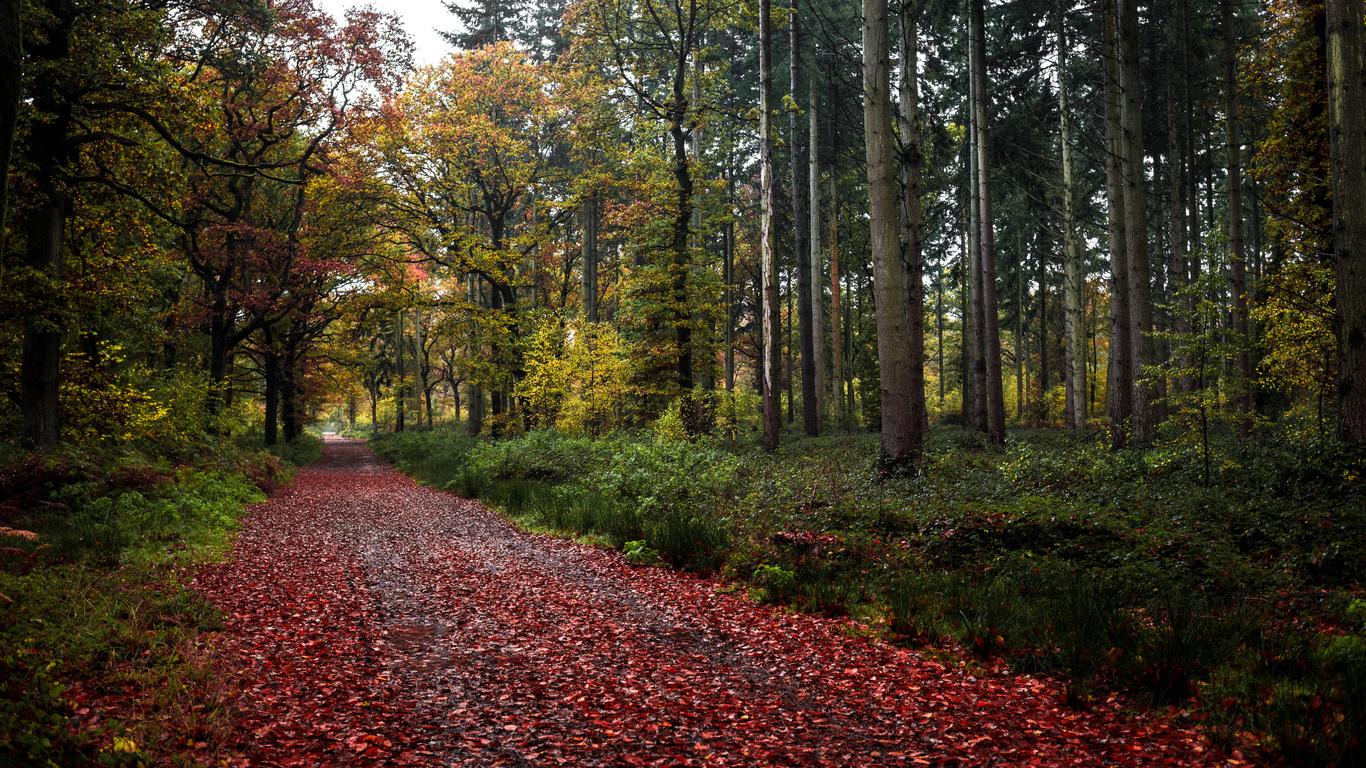 лес, краски, дорога, листья