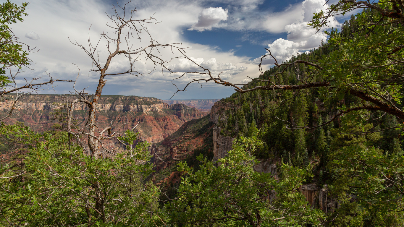 гранд-каньон, arizona, скала, деревья, природа