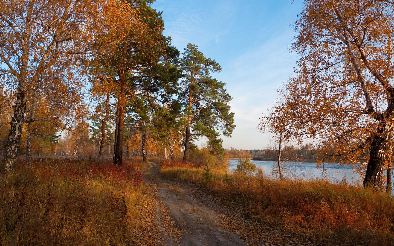 река, лес, дорога, краски