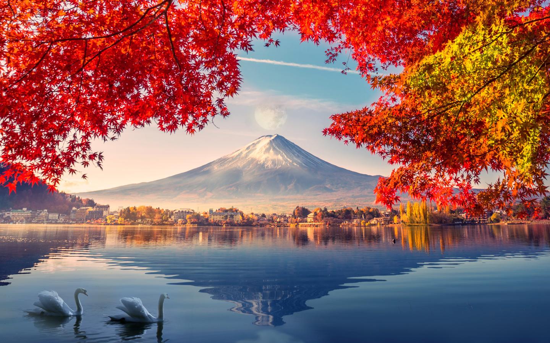 осень, лебеди, пейзаж