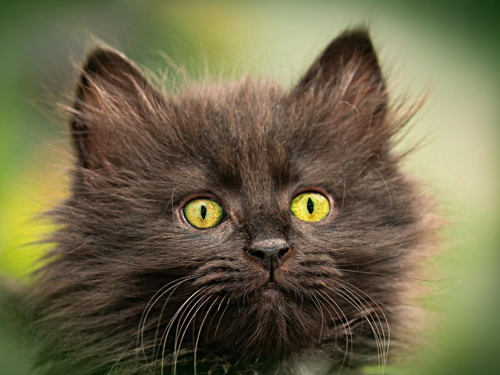 котенок, глаза, малыш, пушистик