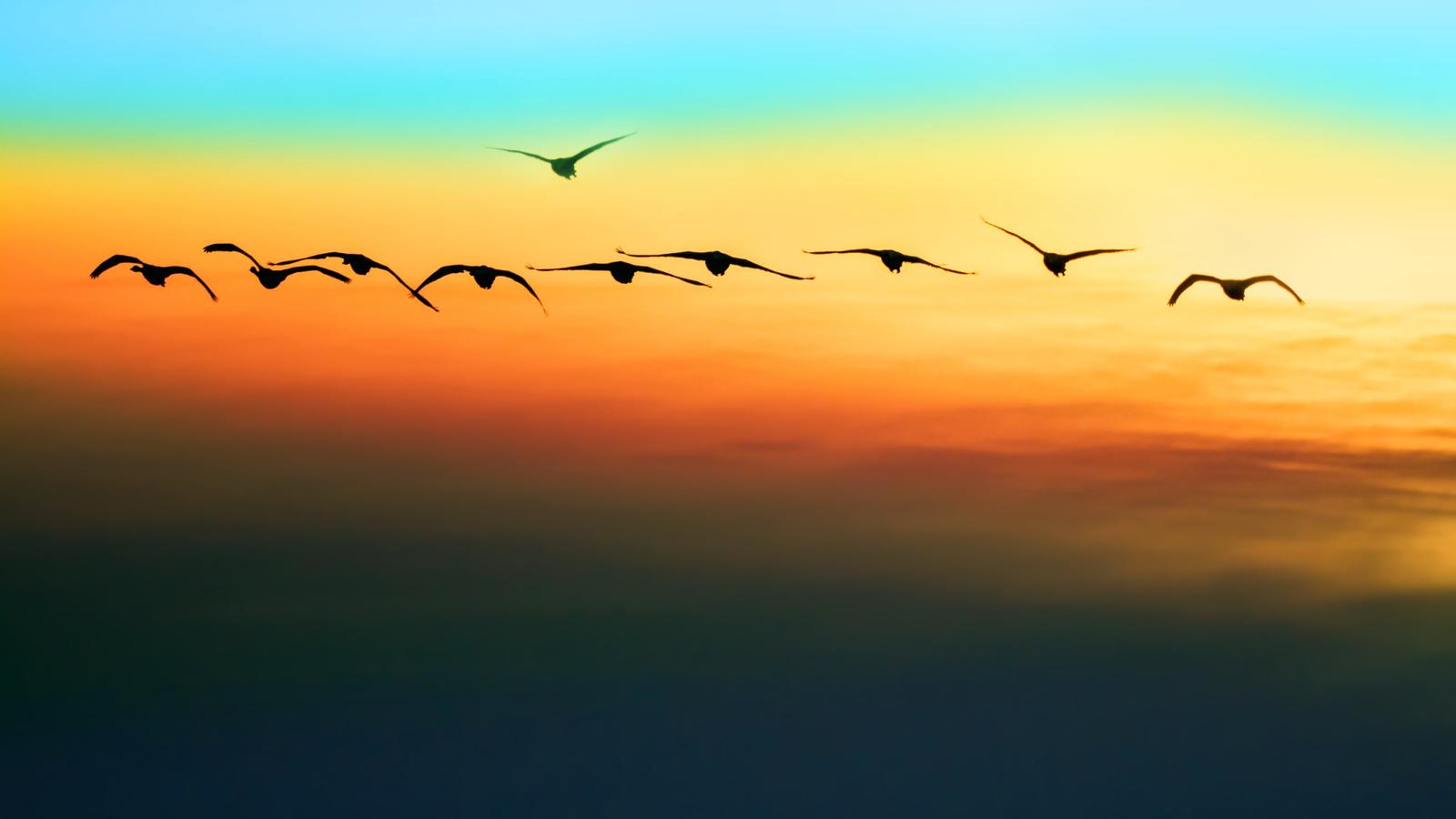 небо, полет, птицы