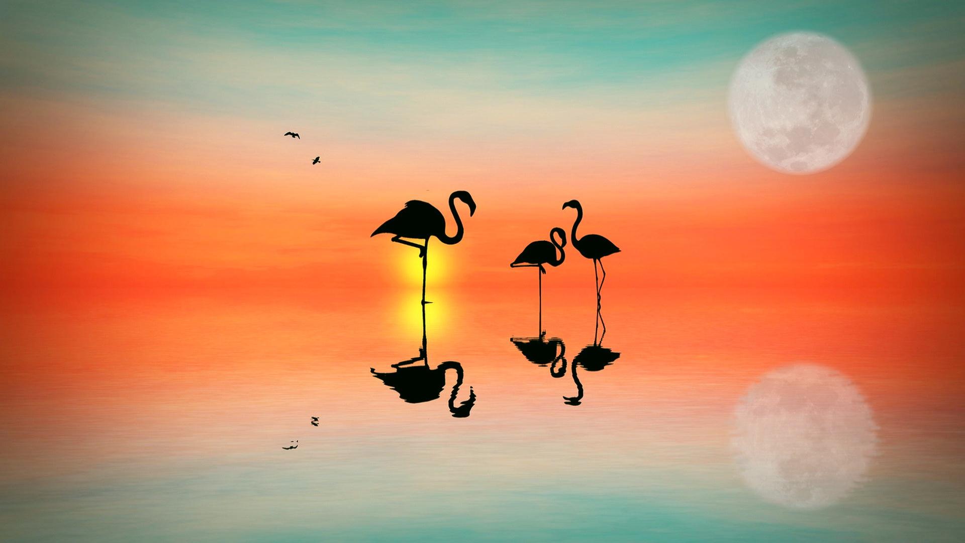 фламинго, вечер, небо
