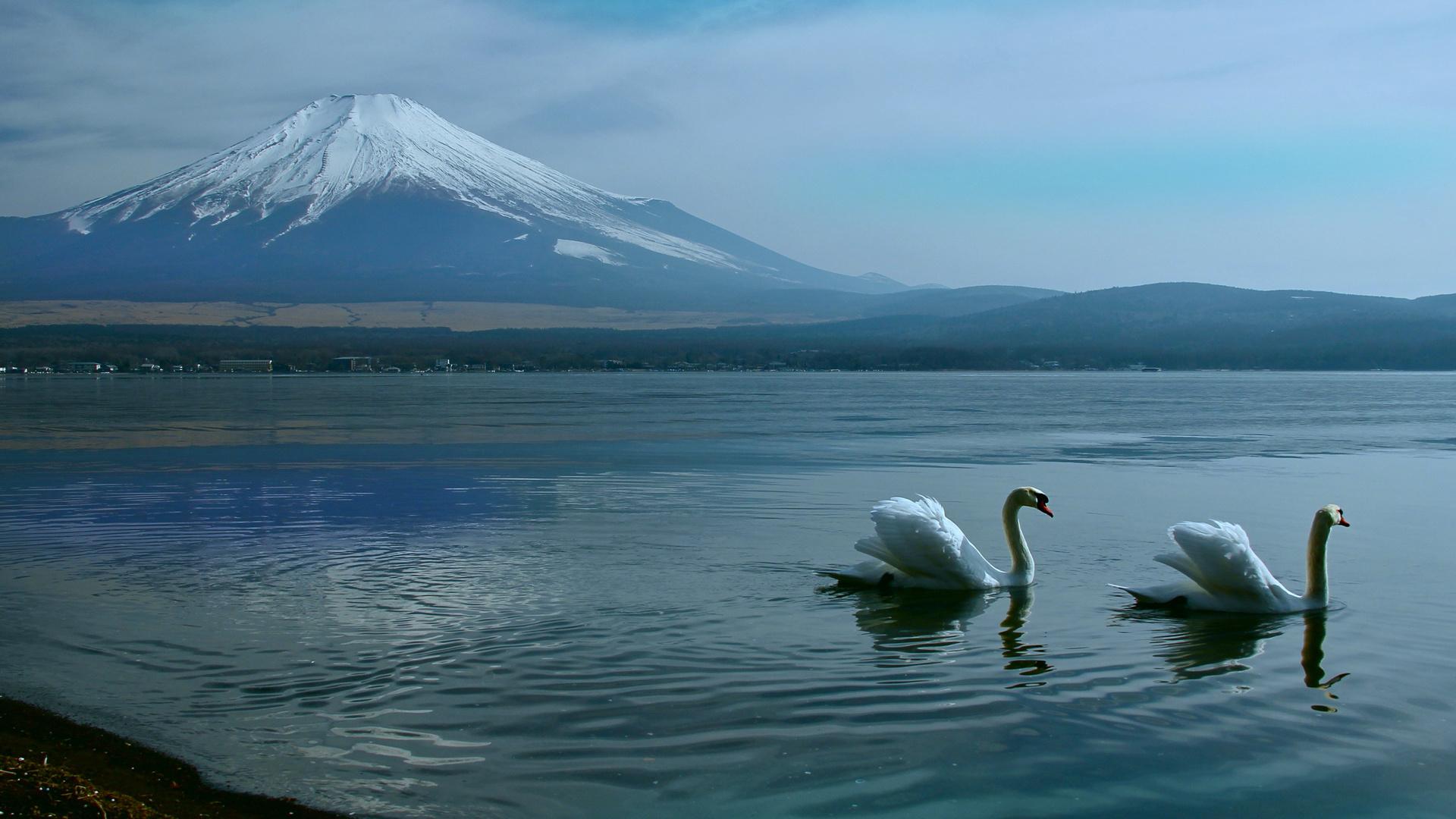 фудзияма, лебеди, Япония